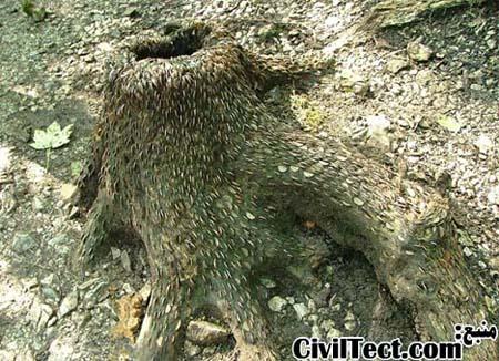ماجرای درختان پول در بریتانیا!