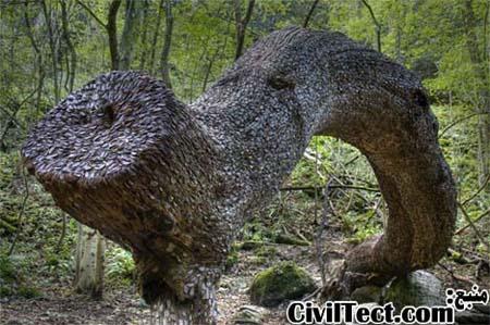 معمای سکه های فرو رفته در تنه درختان!
