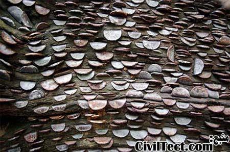 درخت سکه