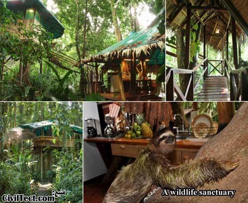کلبه چوبی درختی در میان حیات وحش