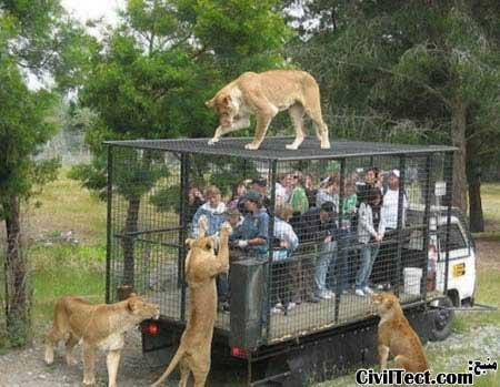 سیاحت از آفریقا در قفس سیار