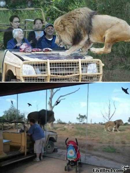 باغ وحشی در نیوزلند - جاذبه های توریستی جالب