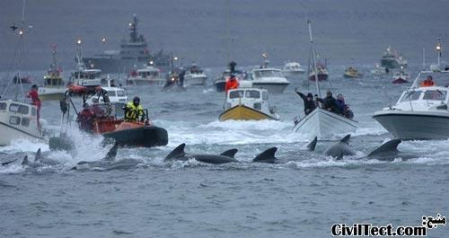 هدایت نهنگها به ساحل