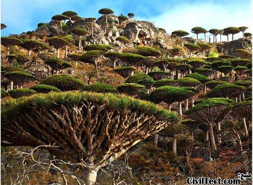 عجیبترین گونه های گیاهی کره زمین