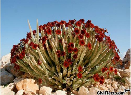 گونه های گیاهی جالب
