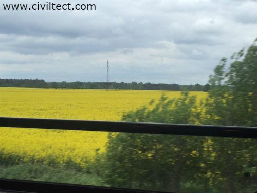 در قطار پراگ به کوتنا هورا از مزرعه های گل بسیار زیادی عبور خواهید کرد